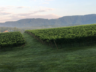 Yadkin Valley Wine Tour - August 2020