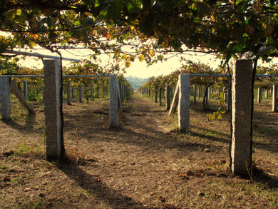 NW Spain and Portugal Wine Tour - September 2020