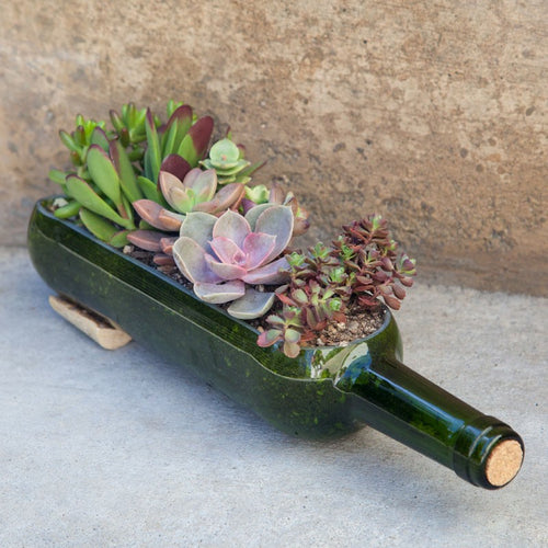 You Grow Girl - Succulent Making Class