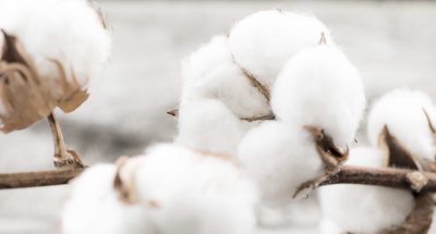 What is Egyptian Cotton and Why Do You Need it?