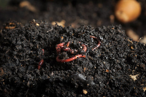 vermicompost, how-to vermicompost, vermicompost pros cons, worm composting, easy vermicompost, vermicomposting instructions