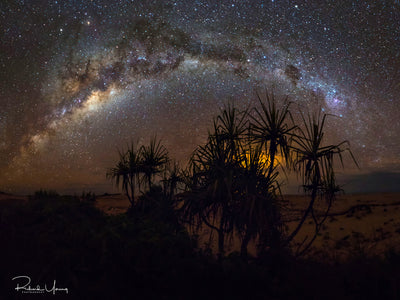 Pandanus Milky Way