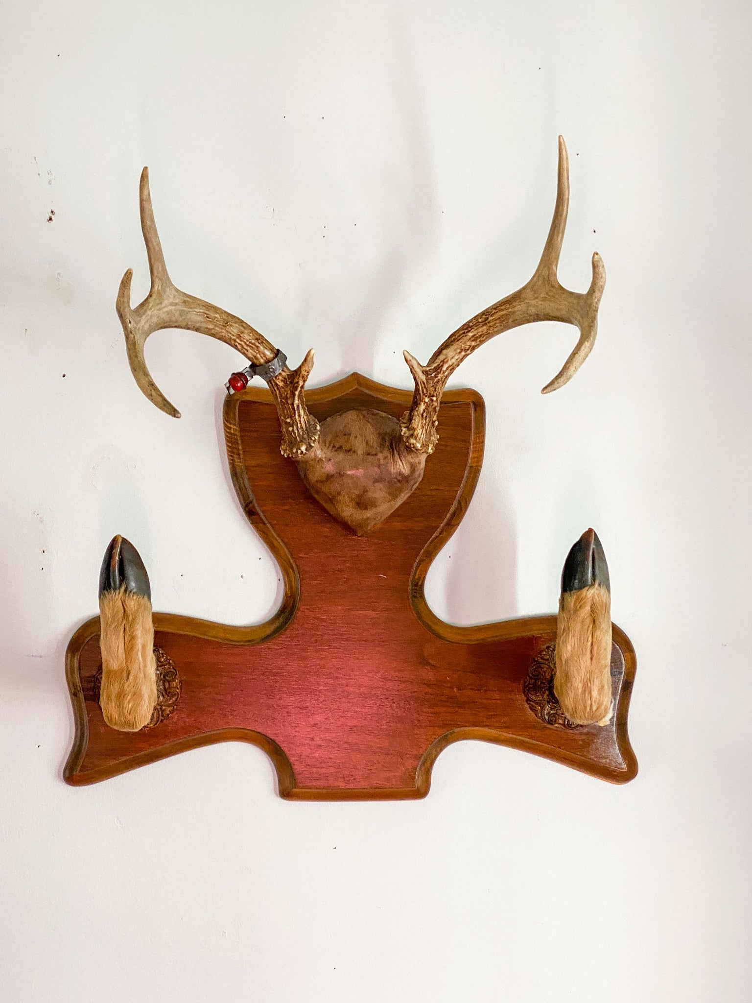 Vintage 8 point Deer Antlers with Hoof Rack.