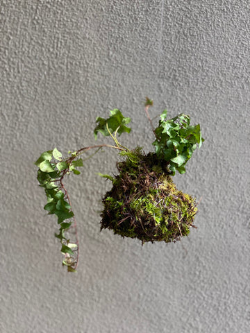 Kokedama, floating island moss ball planter by Moon Magic Co
