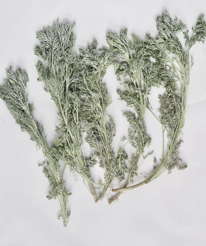 Wormwood for smudge sticks