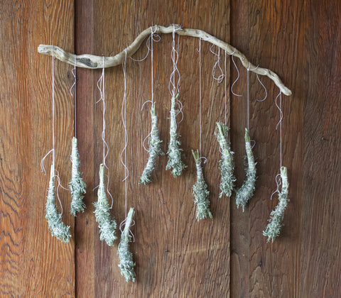 hang drying wormwood smudge sticks, by moon magic