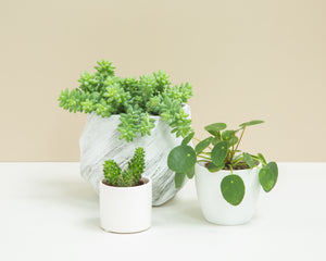 Plant Gift Boxes