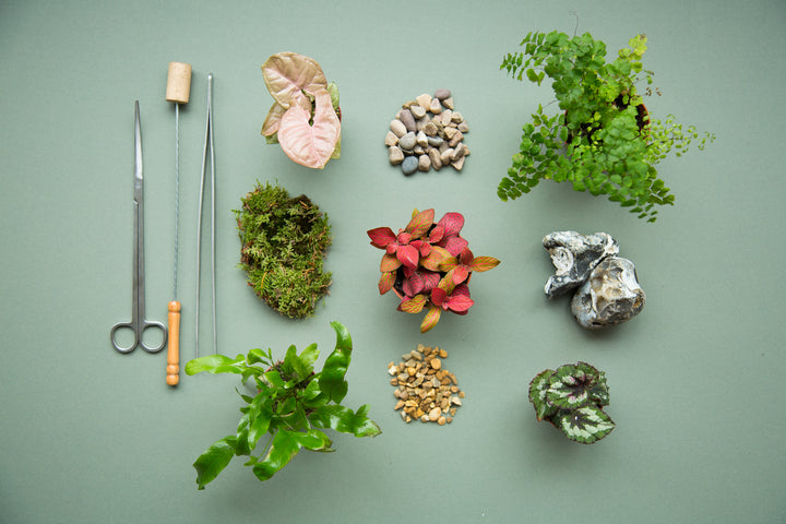 Build Your Own Terrarium Kits