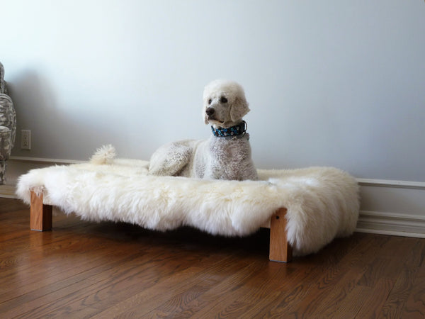 Dog sits proud on a Slumber Wolf dog bed. The Arundel model is designed specifically for larger dog breeds