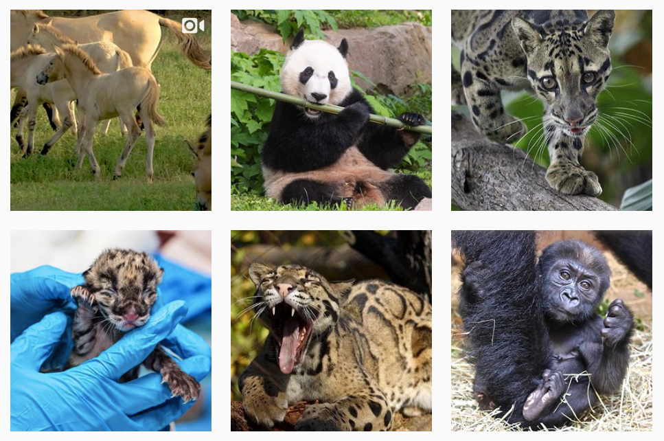 smithsonian zoo top instagram account for girls in science STEM