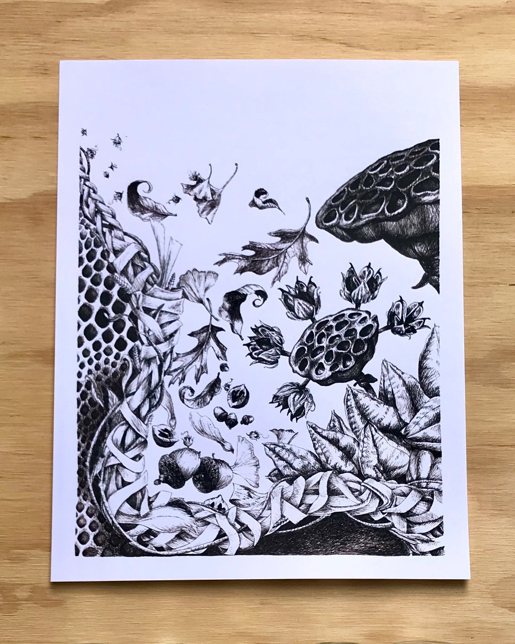 Nature Study Dip Pen Print