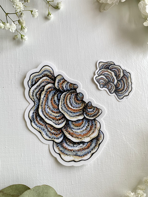 Turkey Tail Mushroom Sticker | Pair