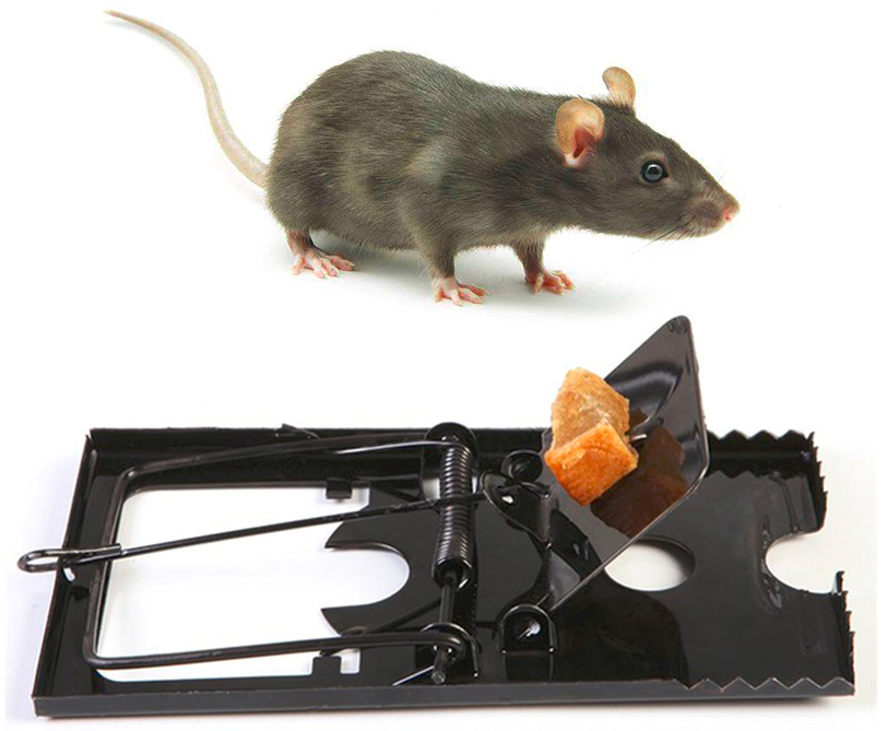5 Pcs Mouse Trap