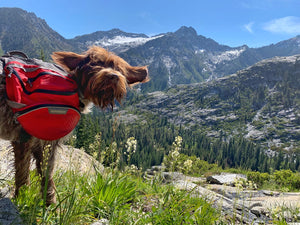 dog with ruffwear backpack in mountains