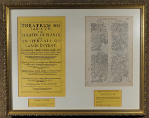 "FRAMED PAGE/LEAF FROM ""THEATRUM BOTANICUM"" BOTANICAL TEXT, 1597, JOHN GERARD - Gallery Antiques"