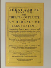 "FRAMED PAGE/LEAF FROM ""THEATRUM BOTANICUM"" BOTANICAL TEXT, 1597, JOHN GERARD"
