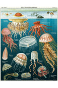 Cavallini 1000 Pc Puzzle - Jellyfish