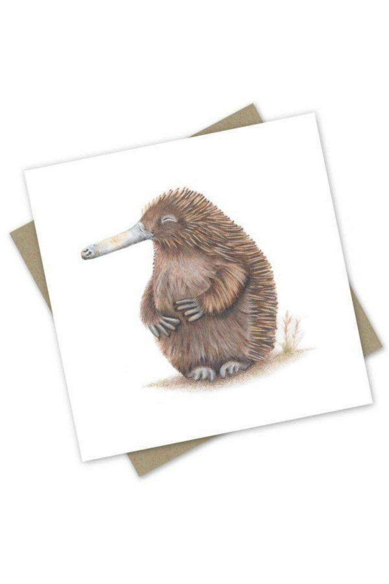 Greeting Card | Hungry Echidna