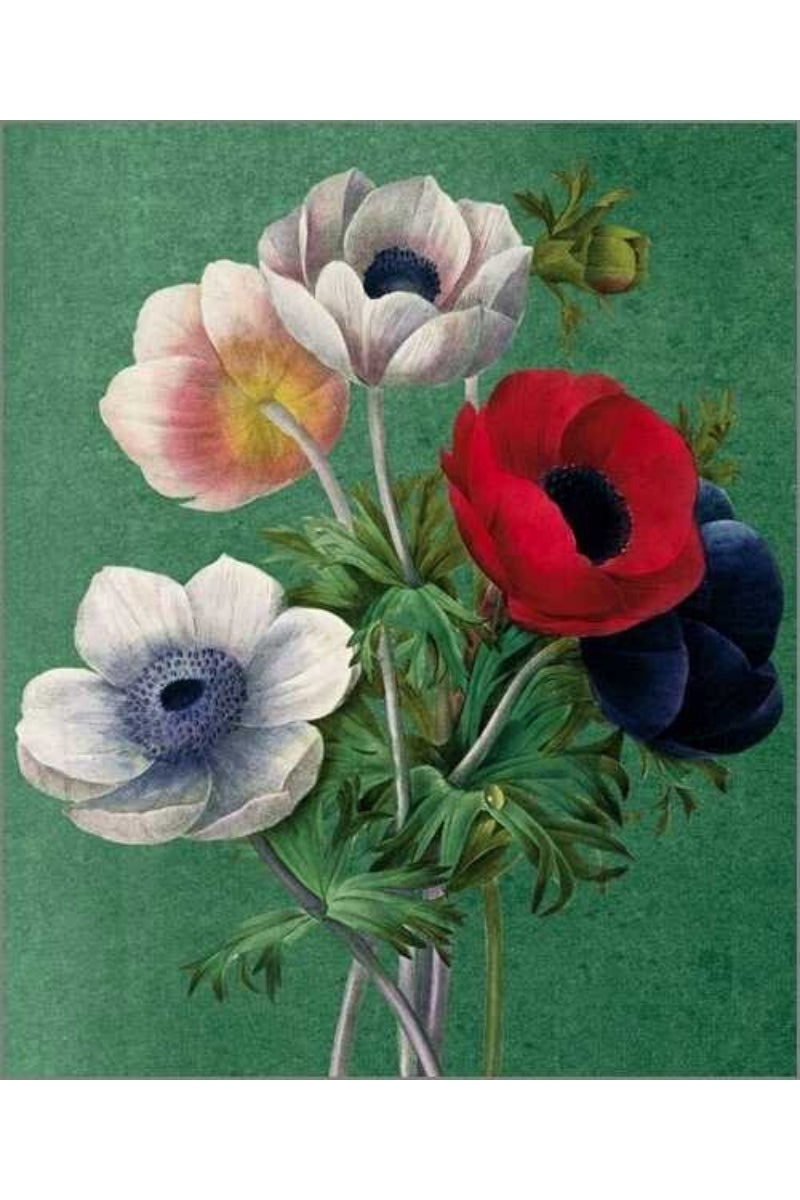 Greeting Card | Anemone