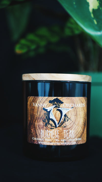 Burmese Teak Coconut Wax Candle