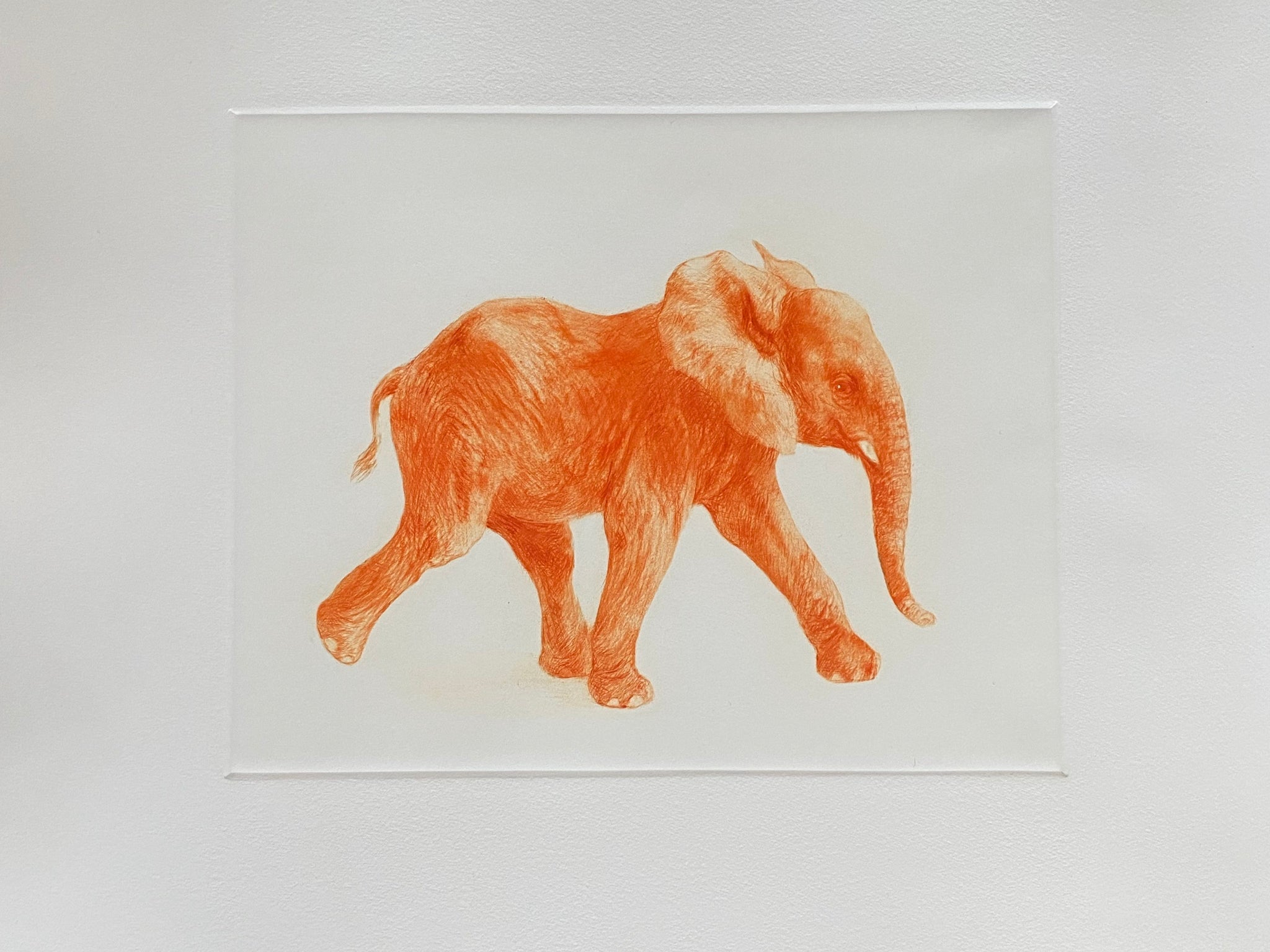 Junger Elefant, orange