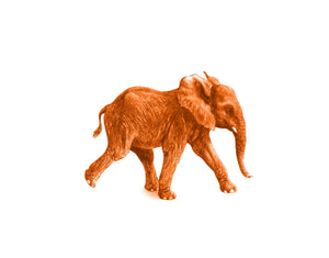 Junger Elefant orange - Kunstkarte