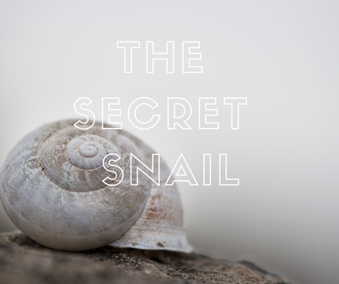 Snail Secretion Filtrate: a Secret Skincare Solution – Adelline