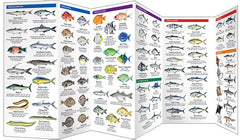 Saltwater Fishes