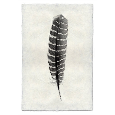 Feather Study 16