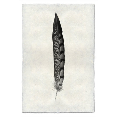 Feather Study 11