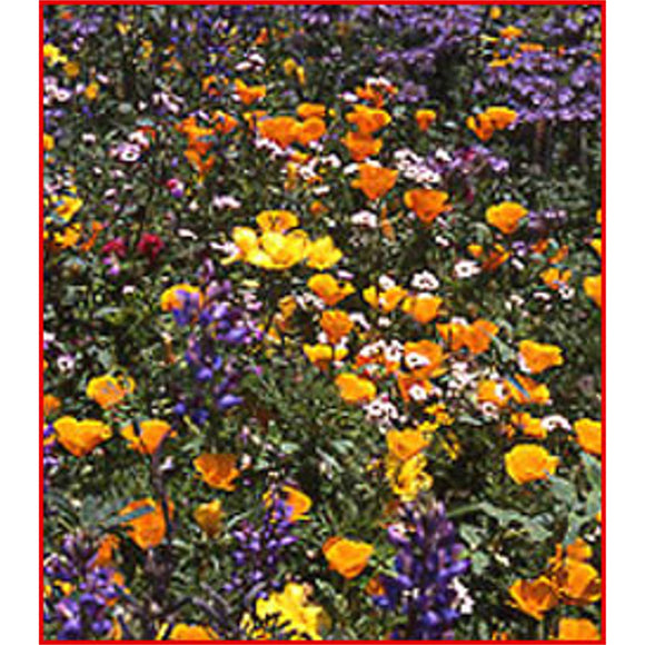 California Natives Wildflower Seed Mix
