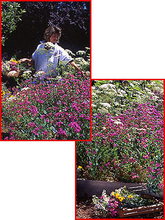 Cut Flowers Wildflower Seed Mix