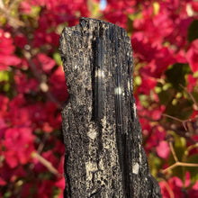 "Load image into Gallery viewer, Schorl ""Black"" Tourmaline 11.3oz - The Crystal Connoisseurs"