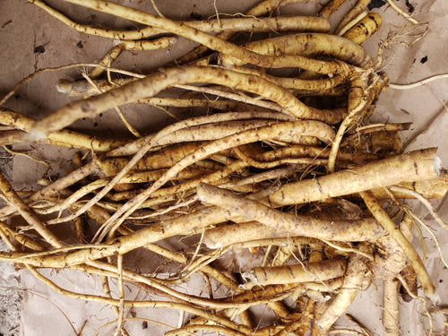 Freshly dug Marshmallow Roots 1lb- PRE ORDER