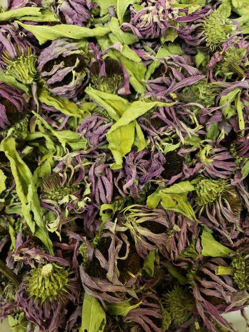 Echinacea flowers- whole- Premium