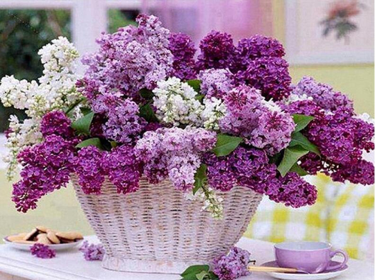 Large Diamond Painting kit Lilacs  Flowers  Mosaic Embroidery  rhinestone painting Cross Stitch Crystal Needlework Kids Activity