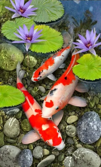 Red White Golden Fish Koi pond  Diamond Painting kit DIY painting style Classical.Diamond Mosaic.