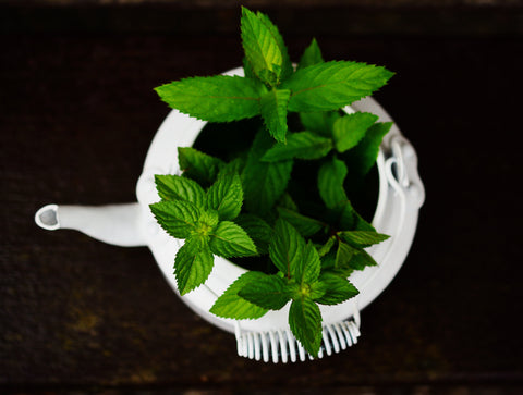 mint leaves in pot | Essential Oil Benefits You Didn't Know About