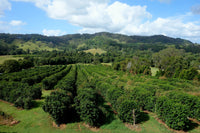 Noosa Black Coffee Plantation