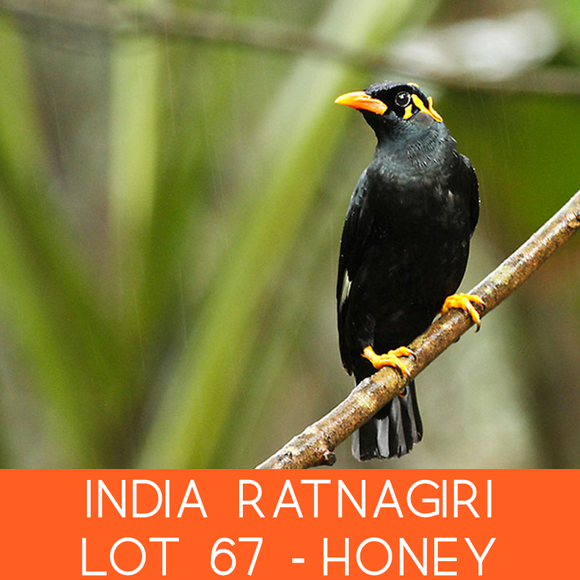 India Ratnagiri Lot 67 - Honey