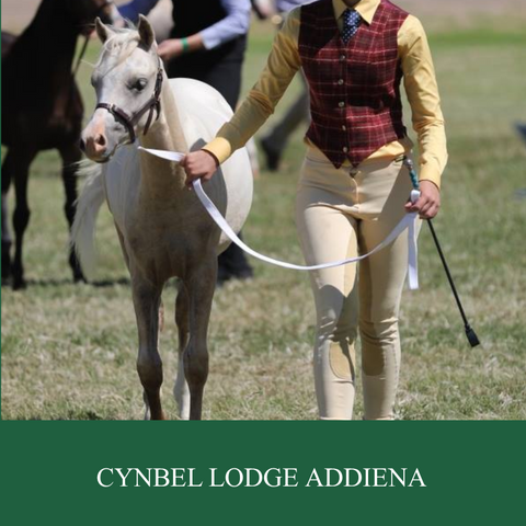 Cynbel Lodge Addiena