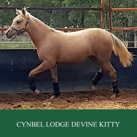 Cynbel Lodge Devine Kitty