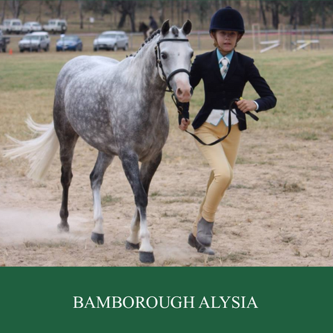 Broodmare - Bamborough Alysia