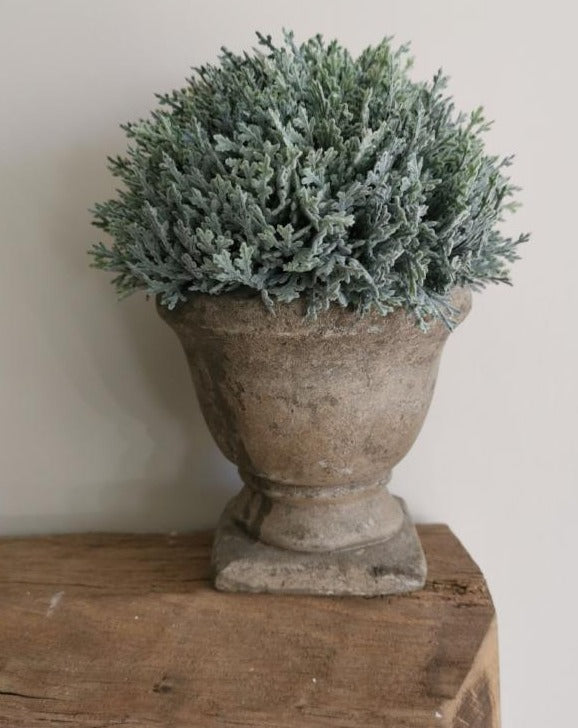 Faux Potted Cypress - TBI