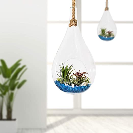 Glass Teardrop with Rope Succulent - The Burrow Interiors