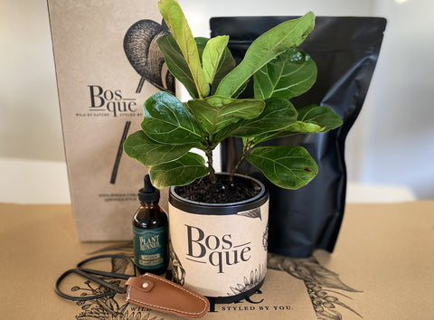 plant-gift-ideas-for-mum-2020-delivery-australia