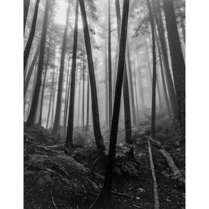 photo art print kyle graham trees in love bowen island bc