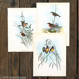 AUDOBON SMALL BIRD Lithograph Prints 1920s