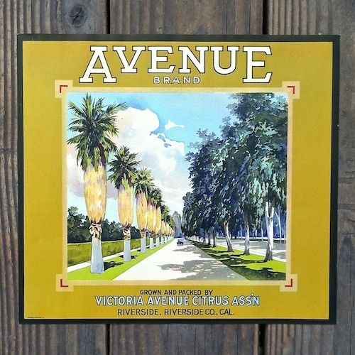AVENUE Brand Citrus Crate Box Label 1930s
