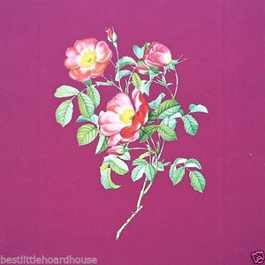 PINK ROSE Flower Art Lithograph Print 1940s